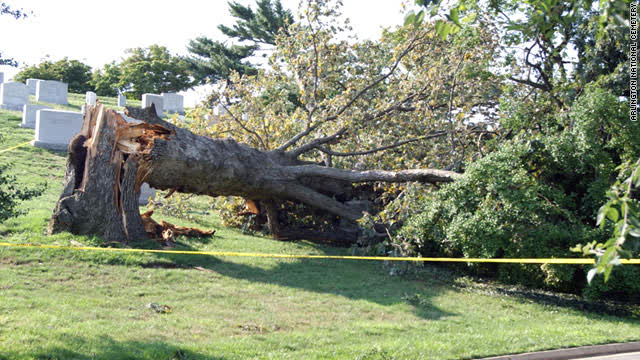 The Mighty Arlington Oak, felled by hurricane Irene August 27th